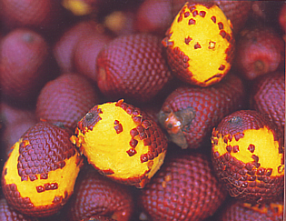 Aguaje Fruir